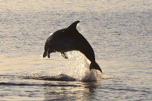Dolphin Scotland