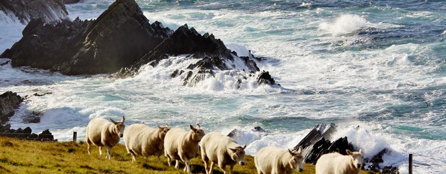 Shetland inseln 1