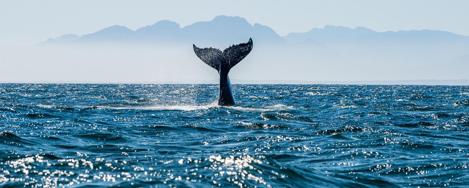 walvissen-azoren