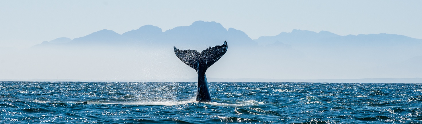 Whale-watching-azores